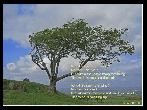 wind_swept_tree,_